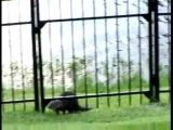 ЗАБАВНОЕ: пёсик играет с речной выдрой
